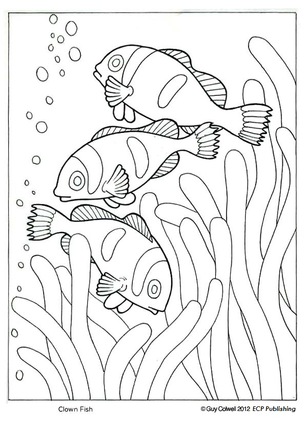 similiar great barrier reef coloring pages keywords