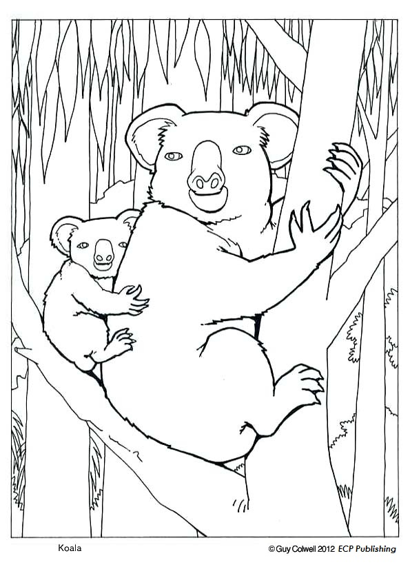 Koala Colouring Pages Animal Coloring Pages for Kids