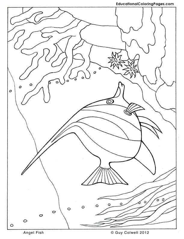 angel fish coloring, fish coloring pages