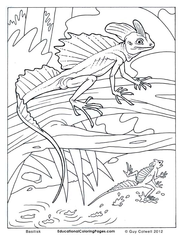 Crawly creepers book two animal coloring pages for kids for Lizard coloring pages