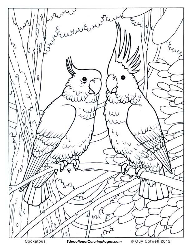 Birds Book One 171 Animal Coloring Pages For Kids Coloring Pages For Adults Bird