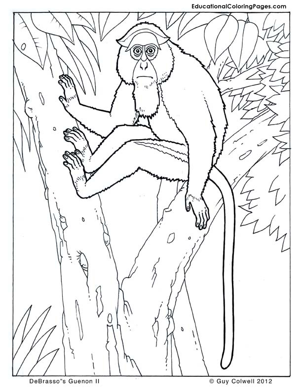 Guenon coloring pages