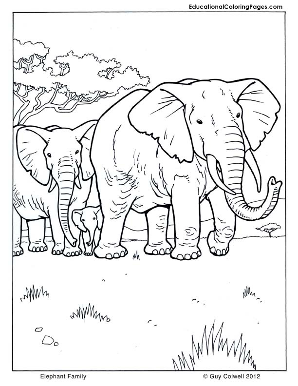 Animal pictures coloring pages animal coloring pages for for Mammal coloring pages