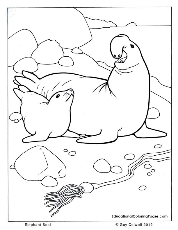 seal coloring | Animal Coloring Pages for Kids