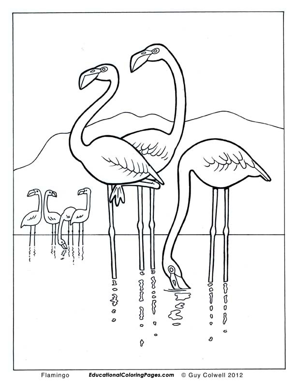 flamingo coloring pages flamingo colouring pages - Flamingo Coloring Pages