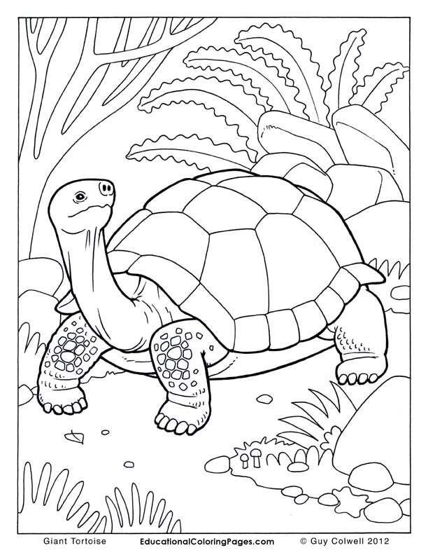 Tortoise coloring pages tortoise colouring