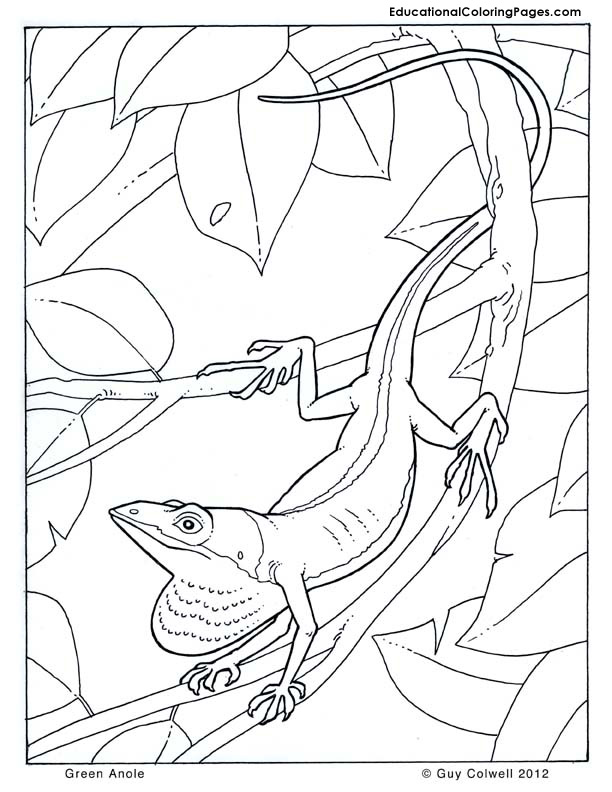Green Anole coloring pages