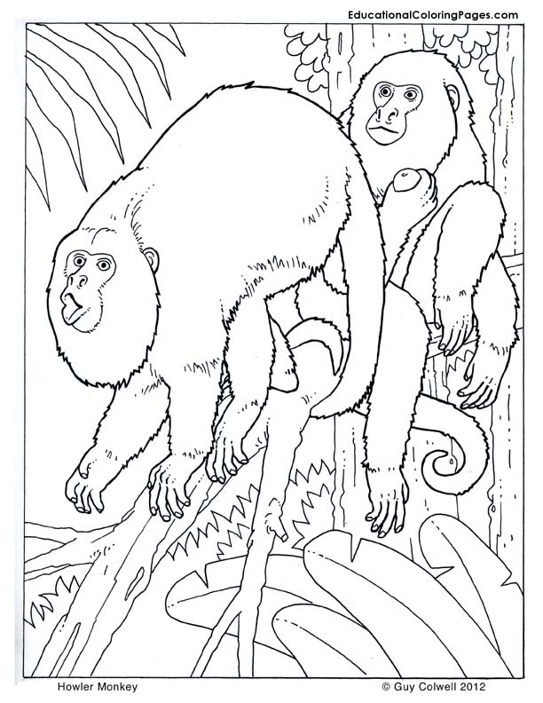 monkey coloring, primates coloring