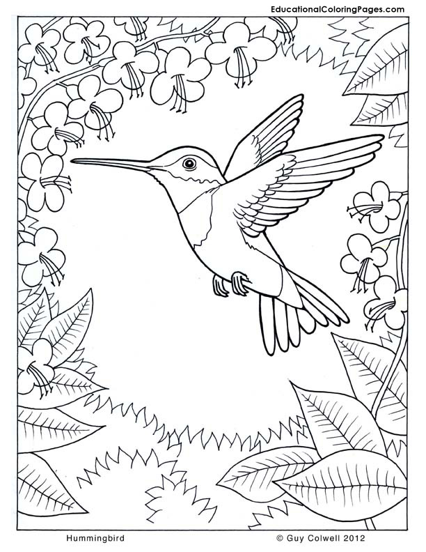 Hummingbird coloring, flower coloring, nature coloring pages