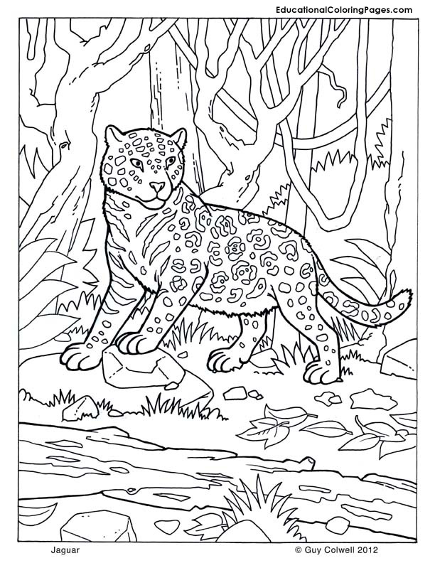 Tags animal coloring pictures free coloring pages for kids jaguar coloring panda coloring pictures to color of animals printable coloring book