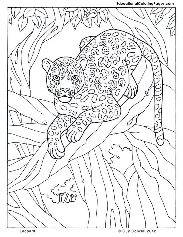 Jungle Animals For Kids Coloring Pages Safari Coloring Pages