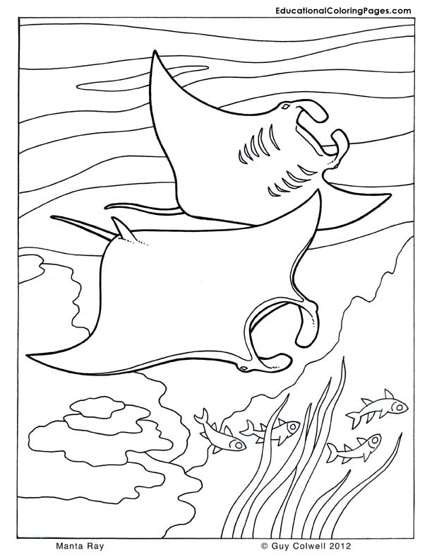 manta ray coloring pages - photo#5