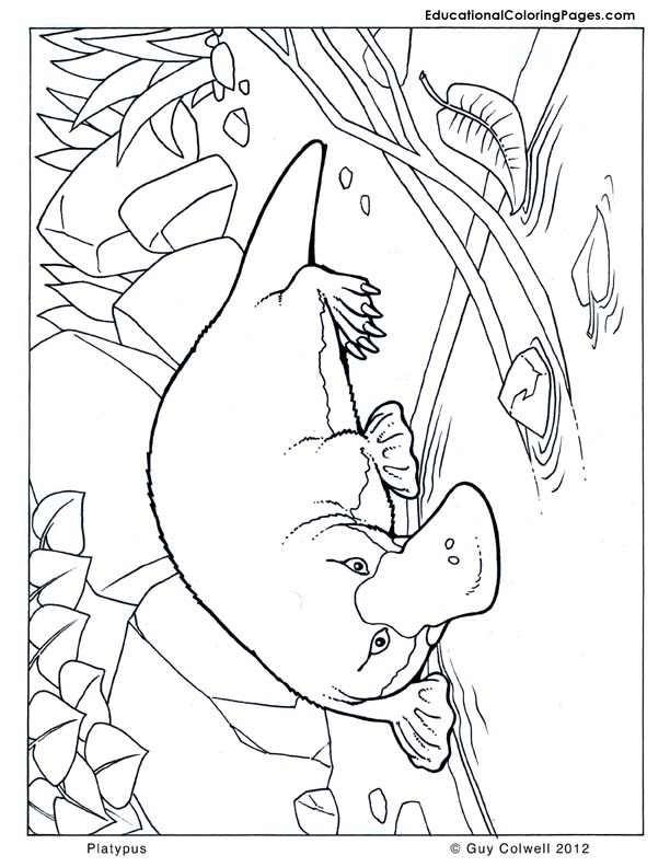 Platypus Coloring Animal Coloring Pages For Kids