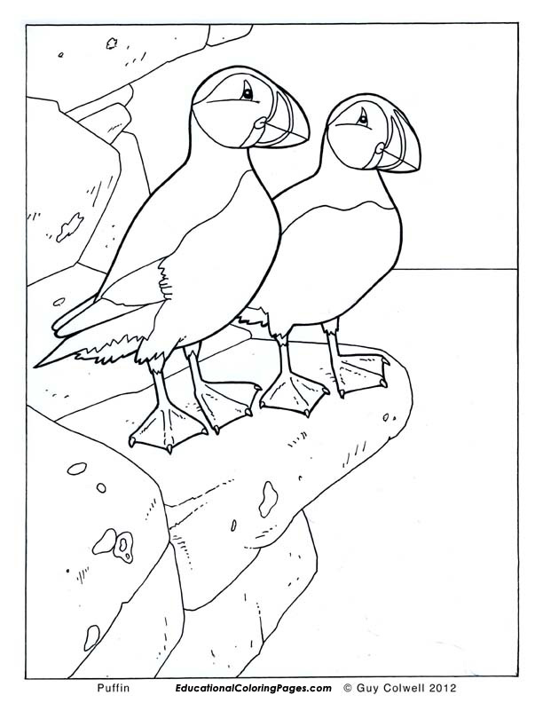 Birds book one animal coloring pages for kids for Puffin coloring pages to print