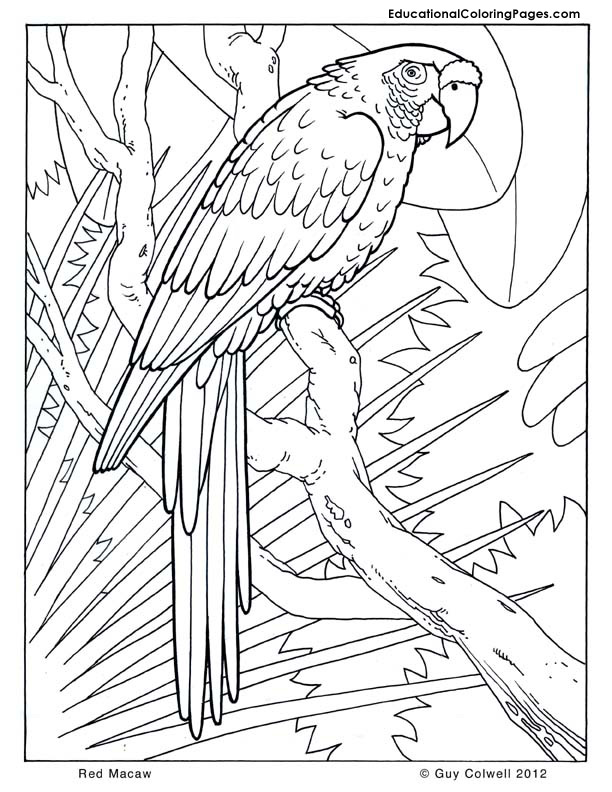 cool coloring sheets  Animal Coloring Pages for Kids