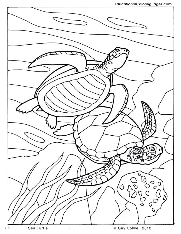 sea turtle coloring pages Animal Coloring Pages for Kids
