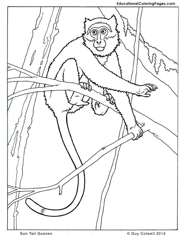 monkey coloring pages, guenon coloring pages