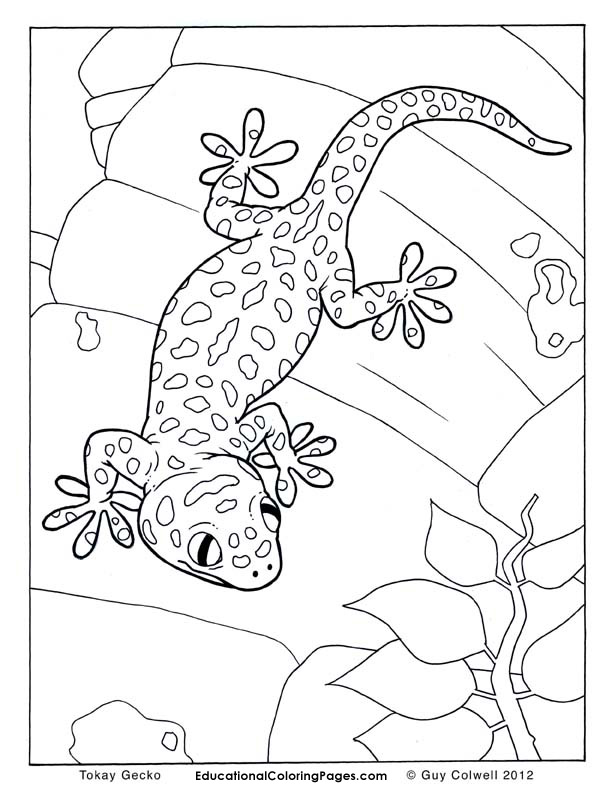 Crawly creepers book one animal coloring pages for kids for Gecko coloring pages