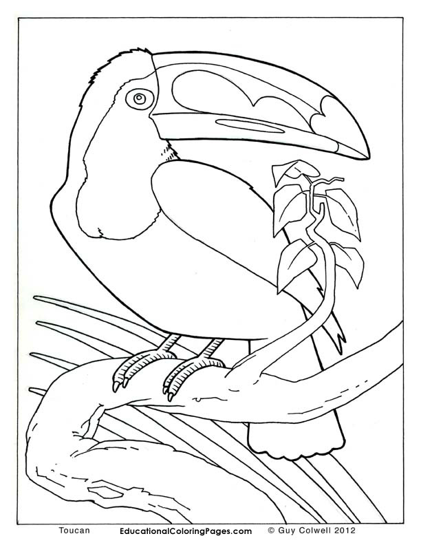toucan coloring pages, birds colouring pages