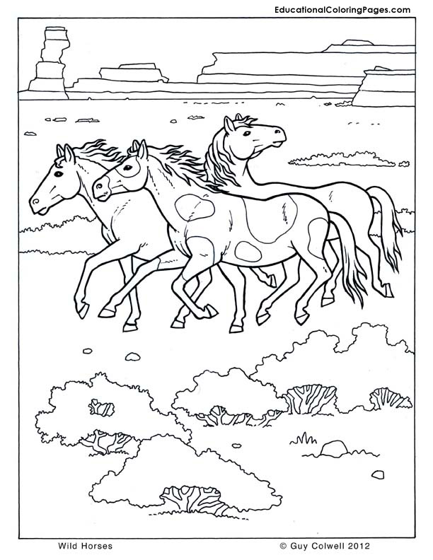 Mammals Book Three Horse Coloring Wild